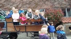 Kleutergroepen naar de kinderboerderij 001